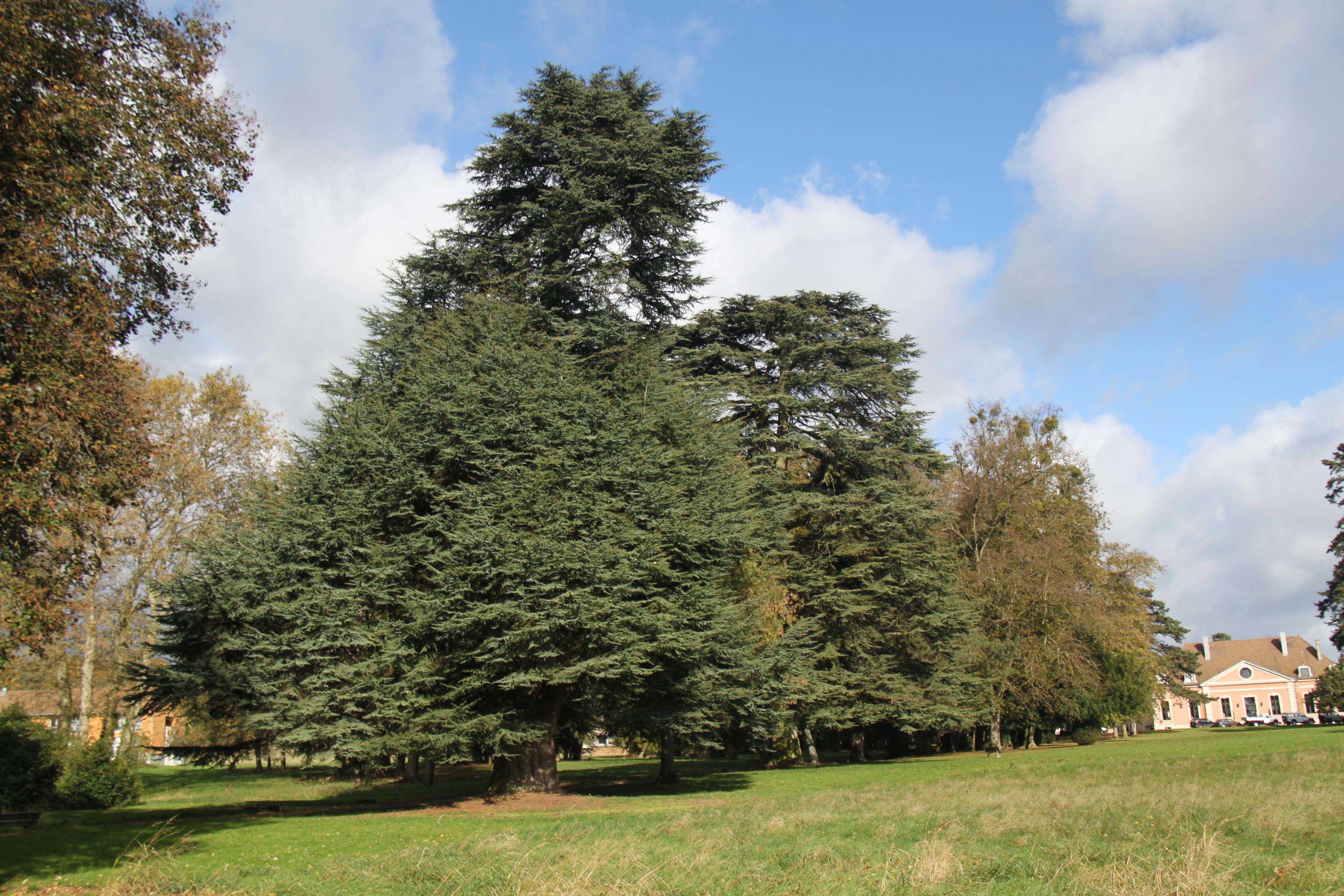 Les arbres du parc du ch teau for Jardin lamartine